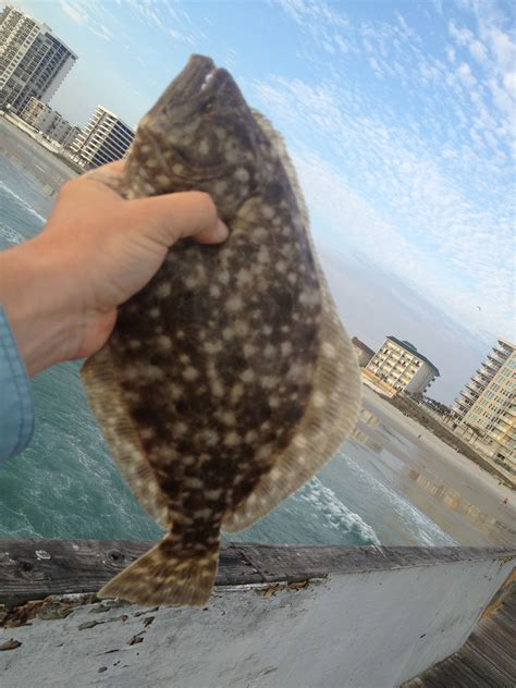 How to Catch Flounder | Fishing from Florida Shores